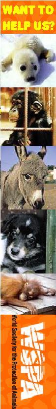 Click for Website of World Society for the Protection of Animals (WSPA): Klicken Sie für die Website der Welttierschutzgesellschaft (WSPA):  http://www.wspa-international.org